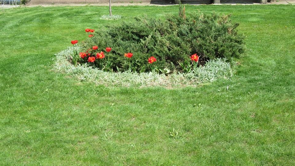 Цвеће на Кеју